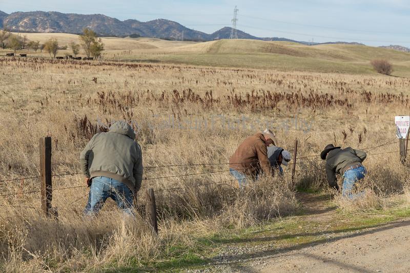 11-23 Yolo Land & Cattle_N5A9891