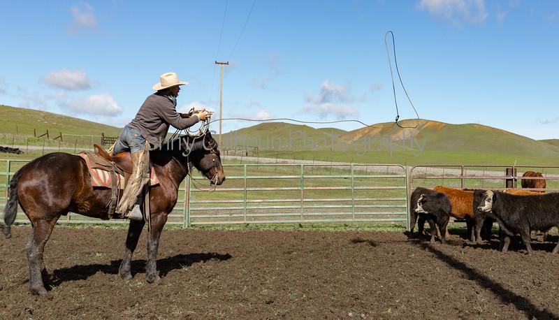 Mark Elworthy Ranch-9471