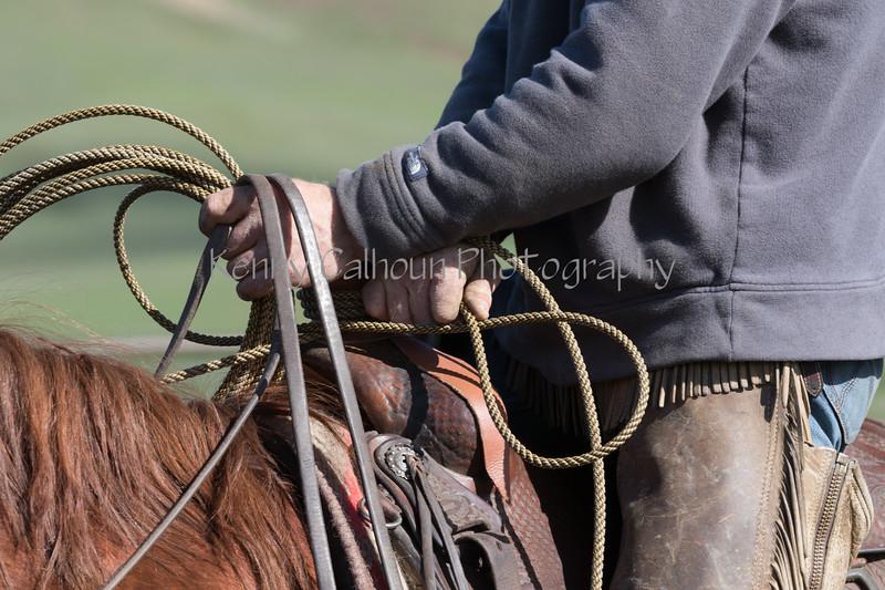 Mark Elworthy Ranch-9085