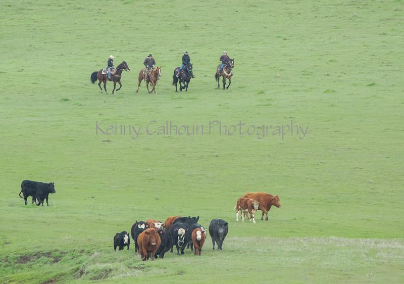 Mark Elworthy Ranch-7938
