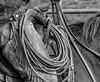 Mark Elworthy Ranch-8386-2
