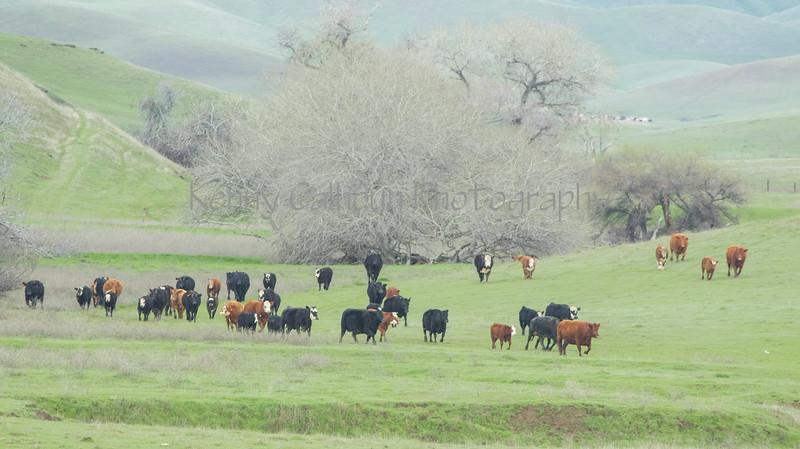 Mark Elworthy Ranch-7878