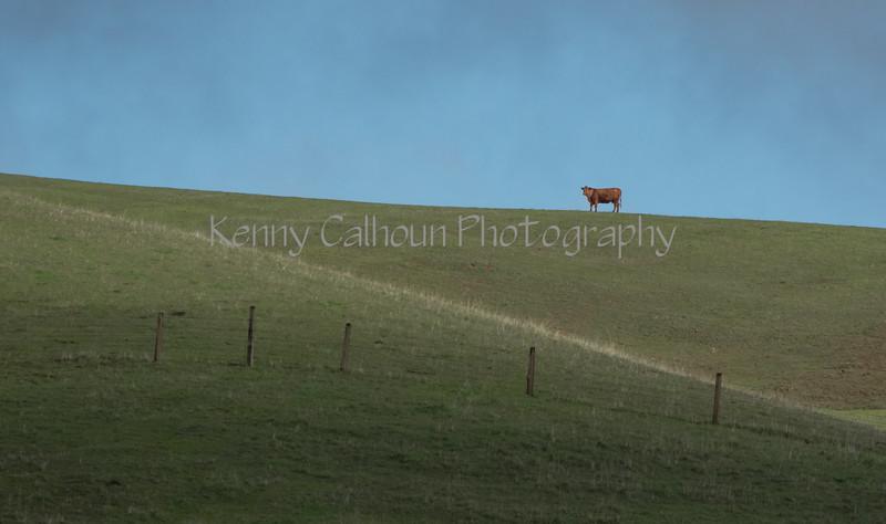 Mark Elworthy Ranch-7823