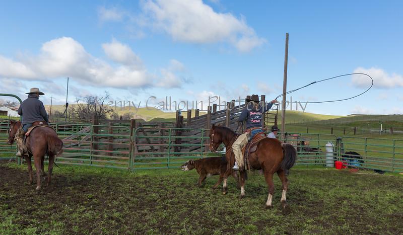 Mark Elworthy Ranch-8819
