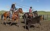Mark Elworthy Ranch-9517