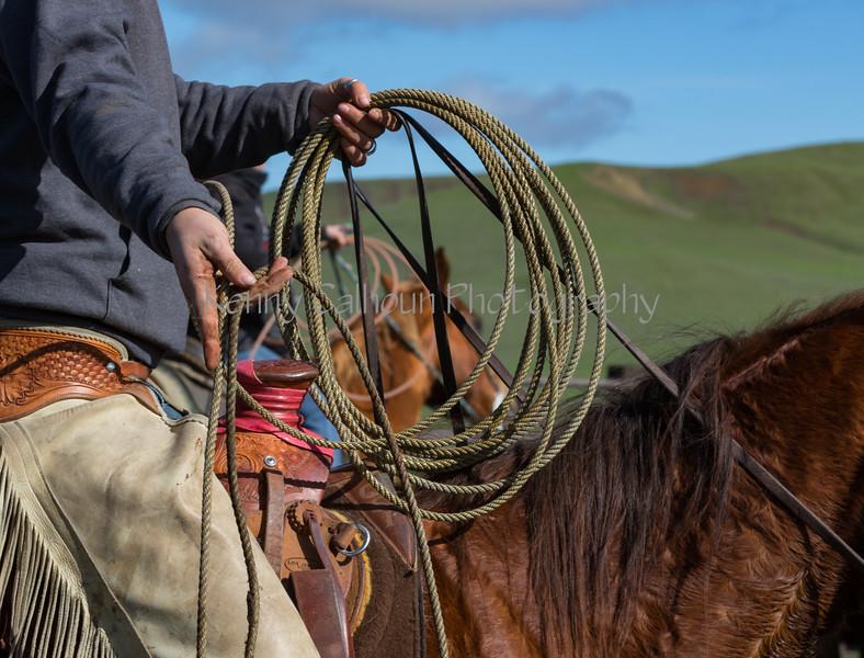 Mark Elworthy Ranch-8846