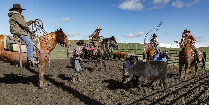 Mark Elworthy Ranch-9636