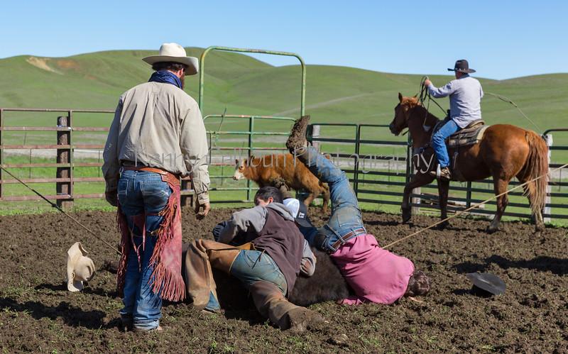 Mark Elworthy Ranch-9306