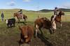 Mark Elworthy Ranch-8700