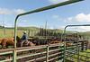 Mark Elworthy Ranch-8388