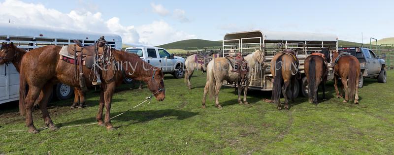 Mark Elworthy Ranch-9353