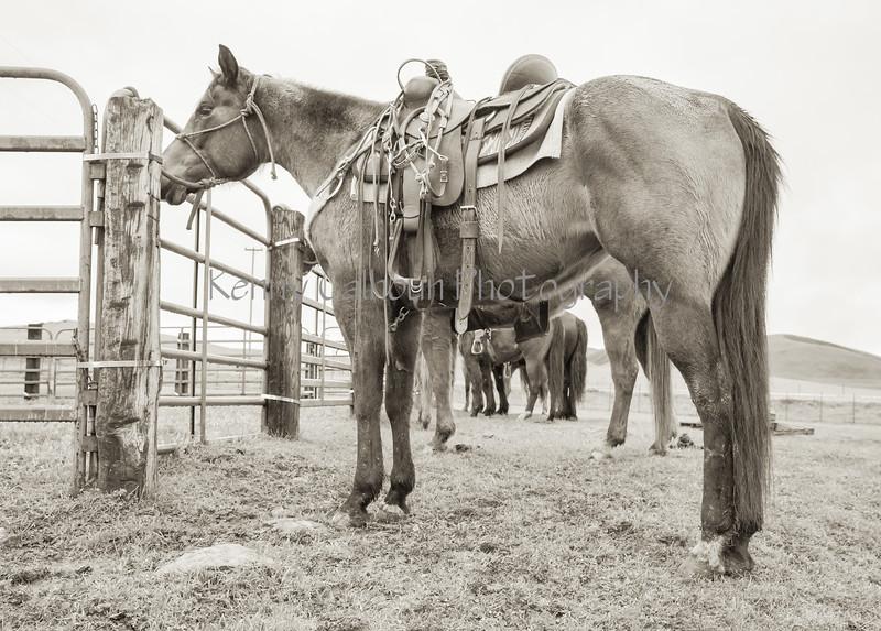 Mark Elworthy Ranch--2