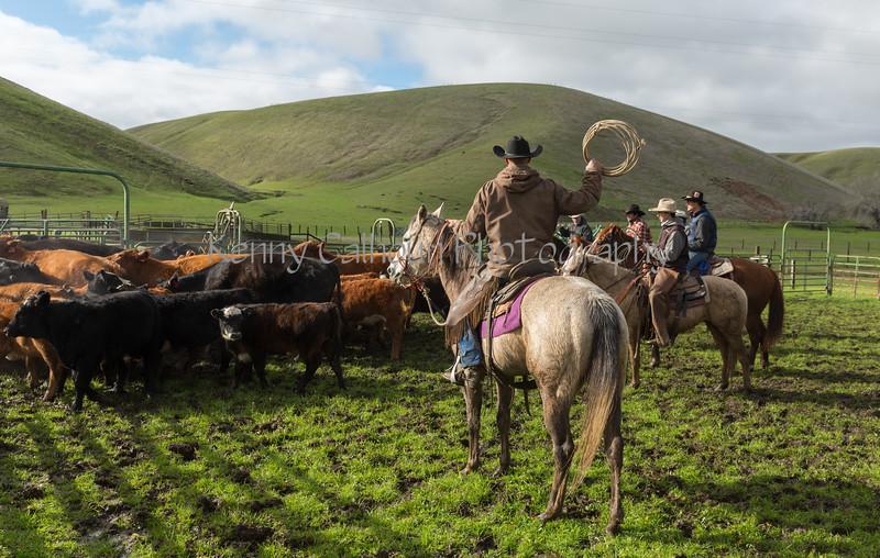 Mark Elworthy Ranch-8282