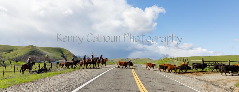 Mark Elworthy Ranch-9894