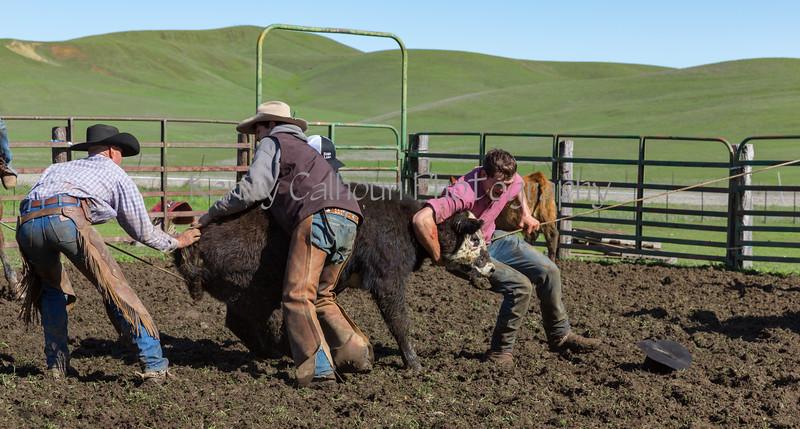 Mark Elworthy Ranch-9299