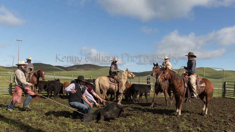 Mark Elworthy Ranch-8683