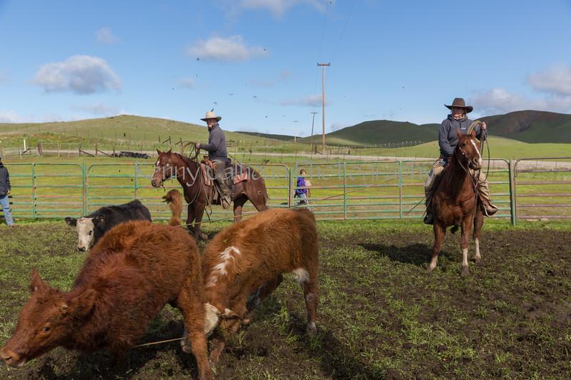 Mark Elworthy Ranch-8696