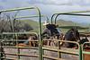 Mark Elworthy Ranch-9622