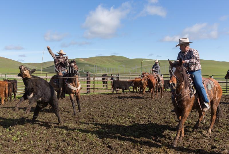 Mark Elworthy Ranch-8995