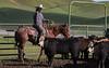 Mark Elworthy Ranch-8800