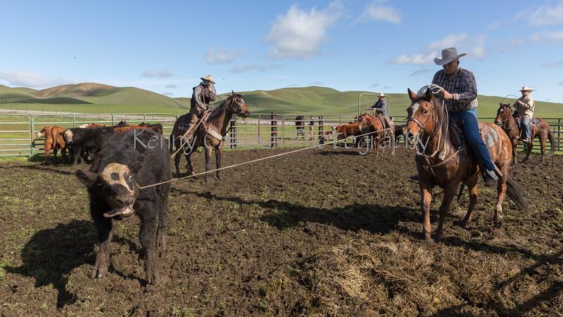 Mark Elworthy Ranch-9001