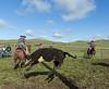 Mark Elworthy Ranch-8547