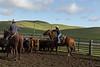 Mark Elworthy Ranch-8768