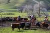 Mark Elworthy Ranch-9552