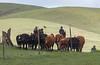 Mark Elworthy Ranch-7992