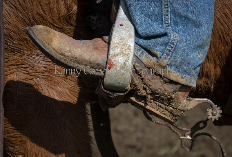 Mark Elworthy Ranch-9013