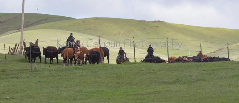 Mark Elworthy Ranch-8000