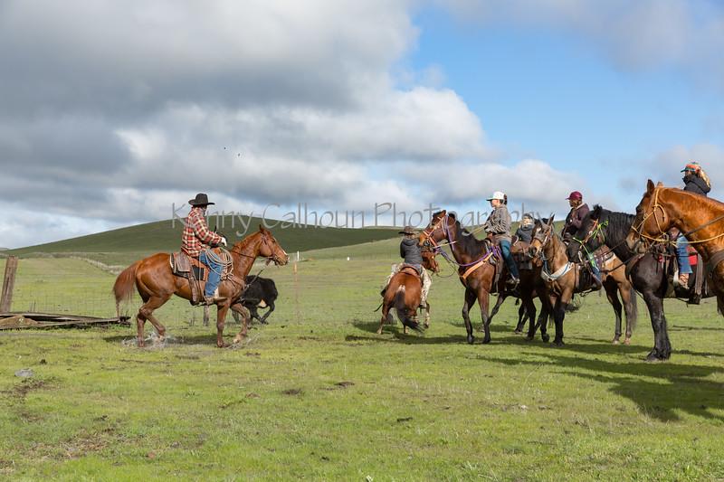 Mark Elworthy Ranch-8119