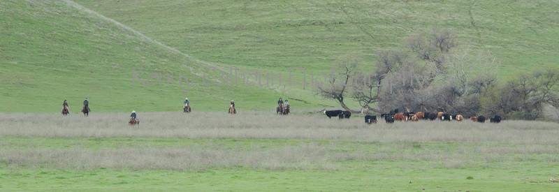 Mark Elworthy Ranch-7874