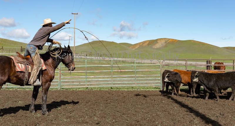Mark Elworthy Ranch-9469