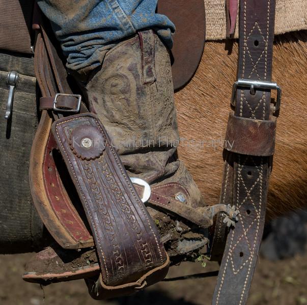 Mark Elworthy Ranch-9207