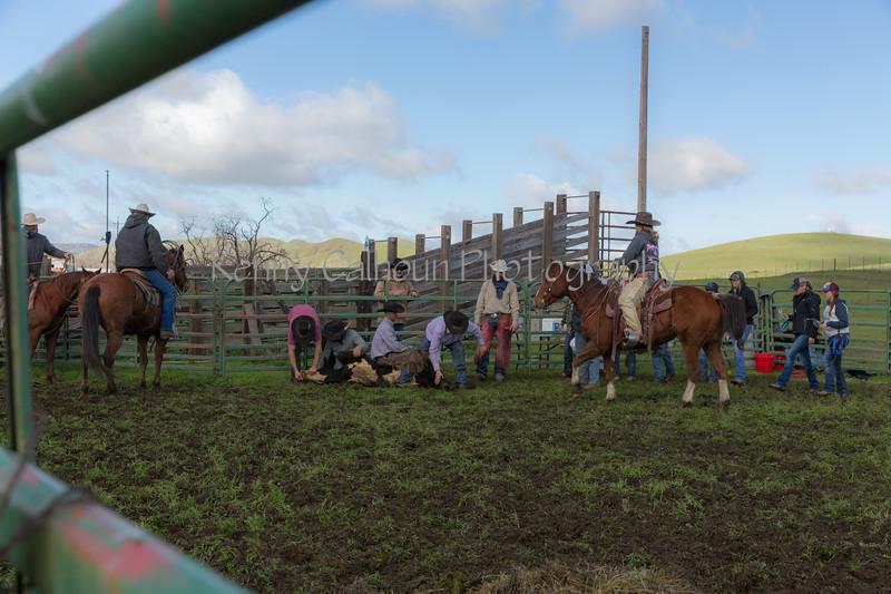 Mark Elworthy Ranch-8829