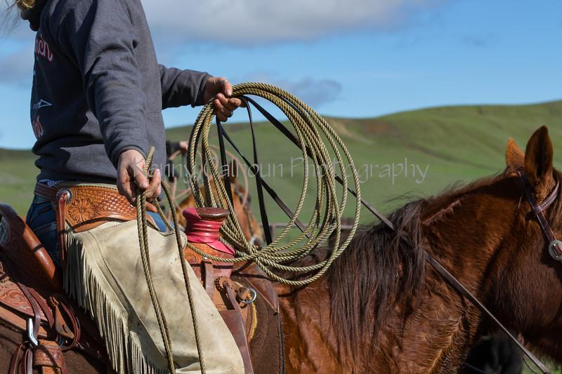 Mark Elworthy Ranch-8848