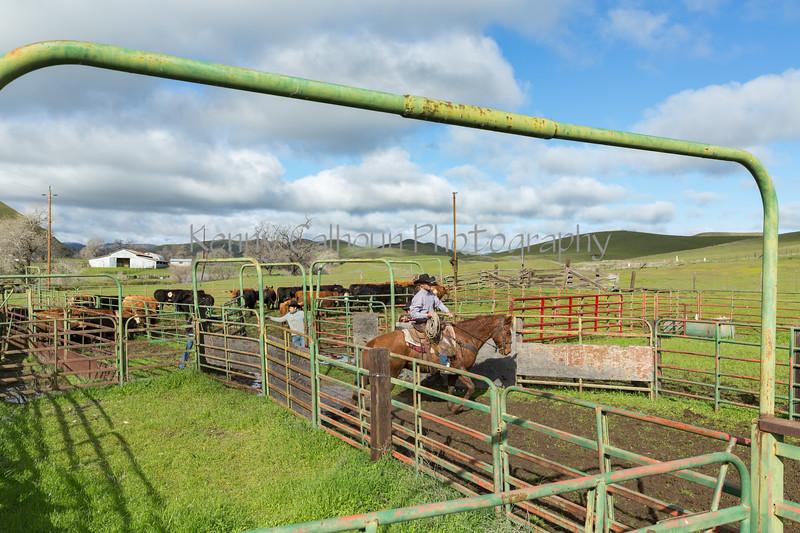 Mark Elworthy Ranch-8393