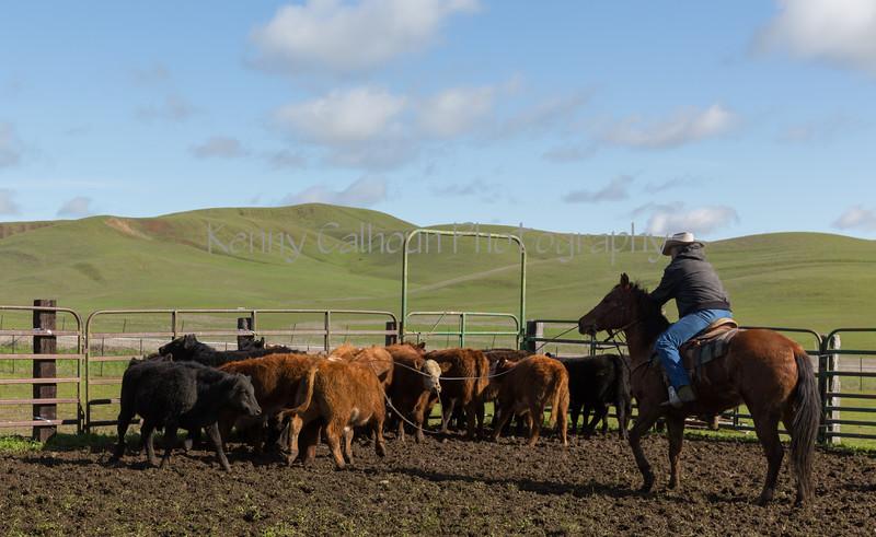Mark Elworthy Ranch-8583