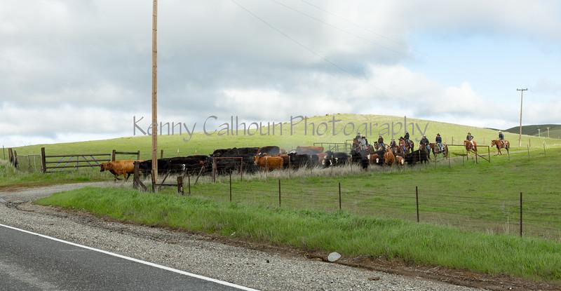 Mark Elworthy Ranch-7987