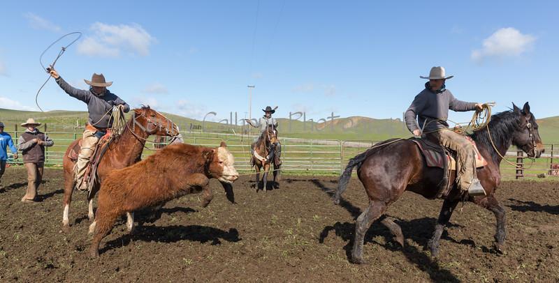 Mark Elworthy Ranch-9335