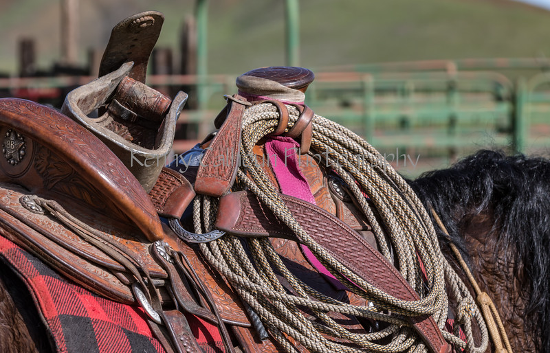 Mark Elworthy Ranch-8658