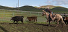 Mark Elworthy Ranch-8773-2