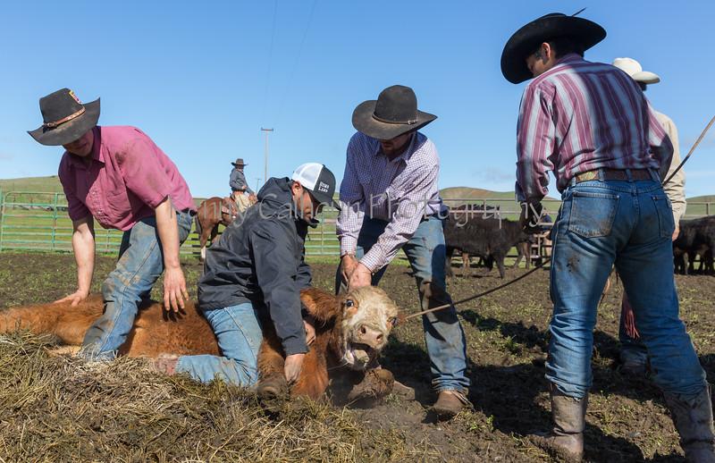 Mark Elworthy Ranch-9127