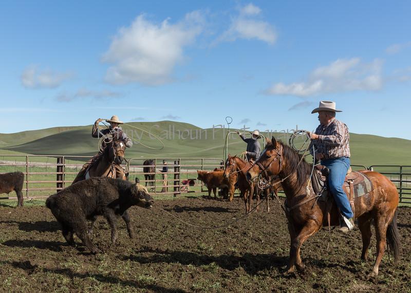 Mark Elworthy Ranch-8990