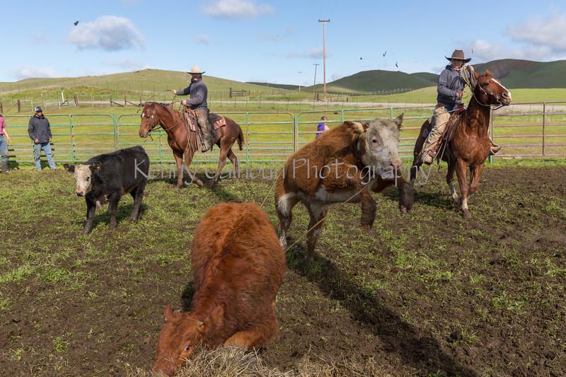 Mark Elworthy Ranch-8699