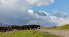 Mark Elworthy Ranch-9843