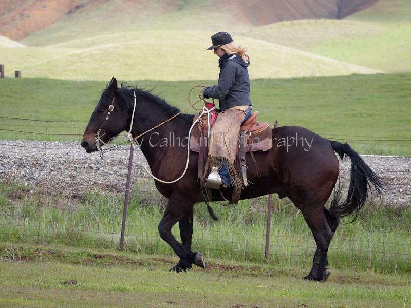Mark Elworthy Ranch-8221