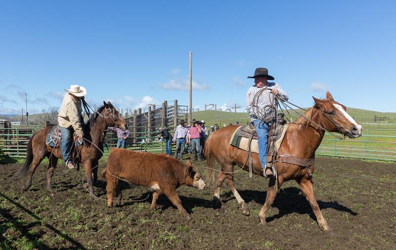 Mark Elworthy Ranch-9106