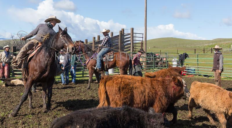 Mark Elworthy Ranch-9328